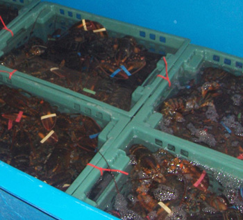 Live Seafood Holding Facilities photo 1