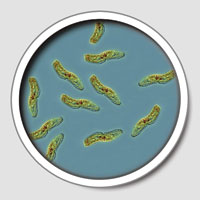 Microorganisms - Pathogens